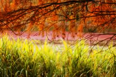 Autumn in the woods brings extraordinary colors and a wonderful atmosphere Stock Photo