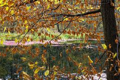 Autumn in the woods brings extraordinary colors and a wonderful atmosphere Stock Images