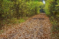 Autumn in the woods brings extraordinary colors and a wonderful atmosphere Stock Photos