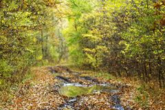 Autumn in the woods brings extraordinary colors and a wonderful atmosphere Stock Image