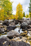 Autumn woods and creek. Autumn woods with yellow maple trees and creek with rocks and foliage in mountain Royalty Free Stock Images