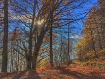 Autumn in the woods Stock Photography