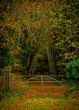 Autumn Woods. The entrance gate to a small woods during Autumn with an enchanted feel located in County Carlow, Ireland Stock Photography