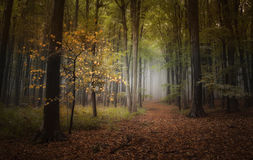 Autumn in the woods. With fog far away royalty free stock image