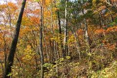 Autumn  woods. Stock Photos