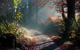 Autumn woods Stock Images