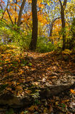 Autumn in the woods. Royalty Free Stock Photography