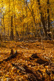Autumn in the woods. Royalty Free Stock Photo