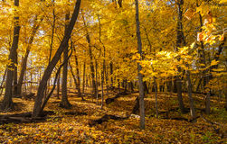 https://thumbs.dreamstime.com/t/autumn-woods-illinois-as-morning-sun-shines-61324839.jpg