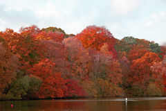 Autumn woods by lake Royalty Free Stock Photo