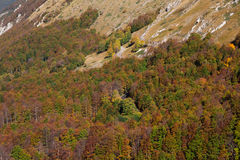 Autumn woods in the lazio region Stock Photography