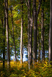 Autumn Woods Royalty Free Stock Images