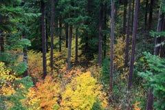 Autumn Woods Oregon Wilderness Royalty Free Stock Photos