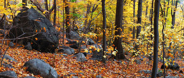 Autumn woods panorama. With colorful trees and rocks in forest stock photo