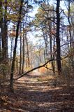 Autumn Woods. A path through the autumn woods into a patch of sunlight with a fallen tree across the way stock image