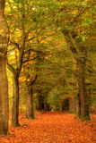 Autumn in the woods with path. The photo was taken in the Netherlands, near Otterlose zand and national park Hoge Veluwe royalty free stock photo