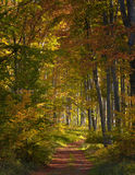 Autumn in the Woods Stock Images