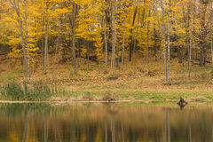 Autumn Woods & Pond Royalty Free Stock Image