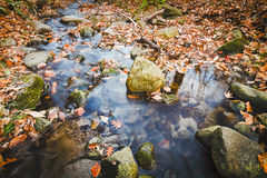 Autumn in the woods. A small stream in the woods, fallen leaves Royalty Free Stock Photo