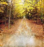 Autumn Woods Trail on Grunge Background Royalty Free Stock Photos