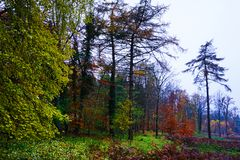 Autumn woods in Norfolk. Woodland scene showing the different colours of autumn Stock Images