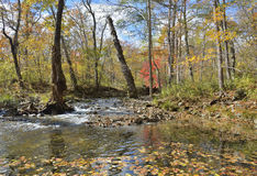 Autumn woodsy river 14. The autumn landscape on small woodsy river Stock Photos