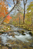 Autumn woodsy river 20. A landscape on small woodsy river, autumn Royalty Free Stock Image