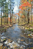 Autumn woodsy river 25. A landscape on small woodsy river, autumn Stock Photography