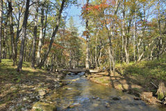 Autumn woodsy river 3. A small woodsy river. Early autumn Royalty Free Stock Photo