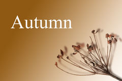 Autumn. Word Autumn with withered branch on brown background stock images