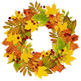 Autumn wreath from dry colored leaves and rowan berries Royalty Free Stock Photos