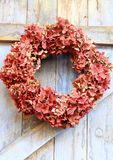 An autumn wreath. Of faded hydrangea flowers hanging on a blue, rough painted wooden barn door, a rustic, shabby chic image royalty free stock image