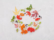 Autumn wreath from leaves, rowan, acorns, flowers and berry on gray background from above. Flat lay style. Autumn wreath from leaves, rowan, acorns, flowers and Royalty Free Stock Image