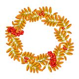 Autumn wreath with rowan, leaves and ashberry isolated on white background. Beautiful greeting card with a wreath of. Realistic 3d mesh rowan branches with Stock Photos