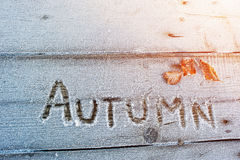 Autumn written on a wooden background with frosts Stock Image