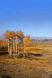 Autumn in Wyoming Stock Photos