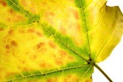 Autumn's Deatails Stock Photo