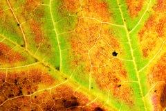 Autumn& x27; s liść Zdjęcia Stock