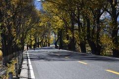 The autumn of Xinduqiao royalty free stock image