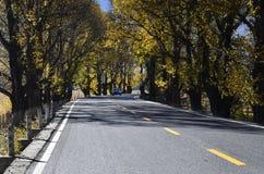The autumn of Xinduqiao Royalty Free Stock Photos
