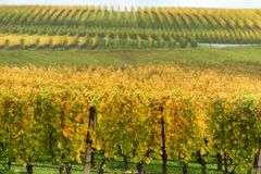 Autumn Yamhill County Wine Country-landschap stock afbeelding