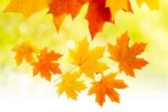 Autumn. yellow autumn leaves Stock Photography