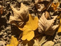 Autumn yellow and brown leaves on the sand Stock Photos
