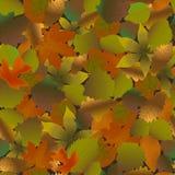 Fallen leaves seamless pattern. Vector illustration of herbarium Royalty Free Stock Photo