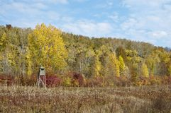 Autumn yellow color forest with hunting stand Royalty Free Stock Image