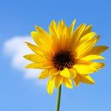 Autumn yellow flower Stock Photo