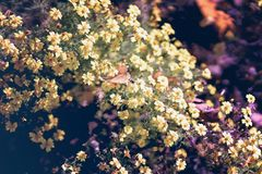 Autumn yellow flowers on a street flowerbed with bee, sunny day, changing seasons. Blur, selective focus. Fall, yellow flowers on a street flowerbed with bee royalty free stock photo