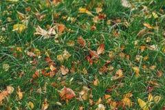 Autumn yellow foliage on green grass in autumnal park stock photo