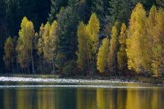 Autumn  with the yellow foliage Royalty Free Stock Photos