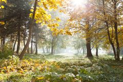 Autumn yellow landscape with sunlight Royalty Free Stock Photography